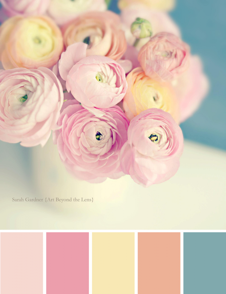 ranunculus pastels