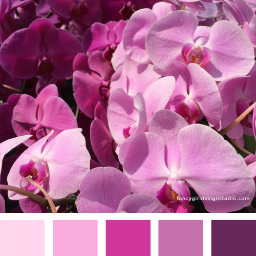 Pink & Purple Orchids