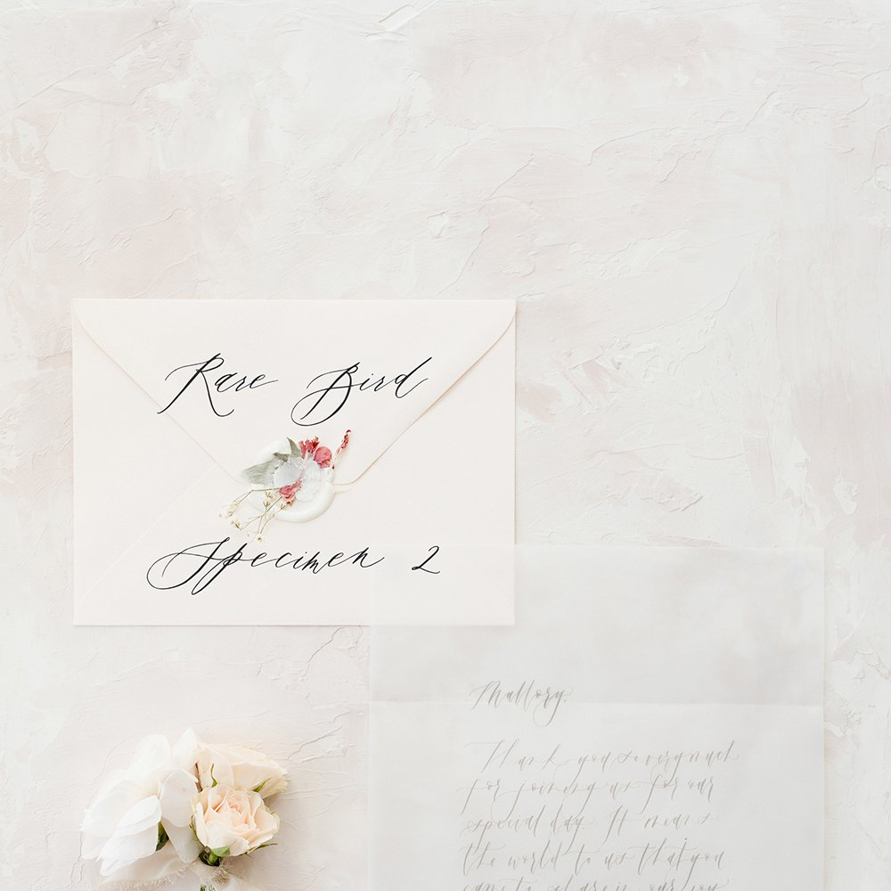 Rare Bird Specimen 2 - 12 of the most beautiful calligraphy fonts for weddings